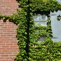 A Love of Bricks and Ivy