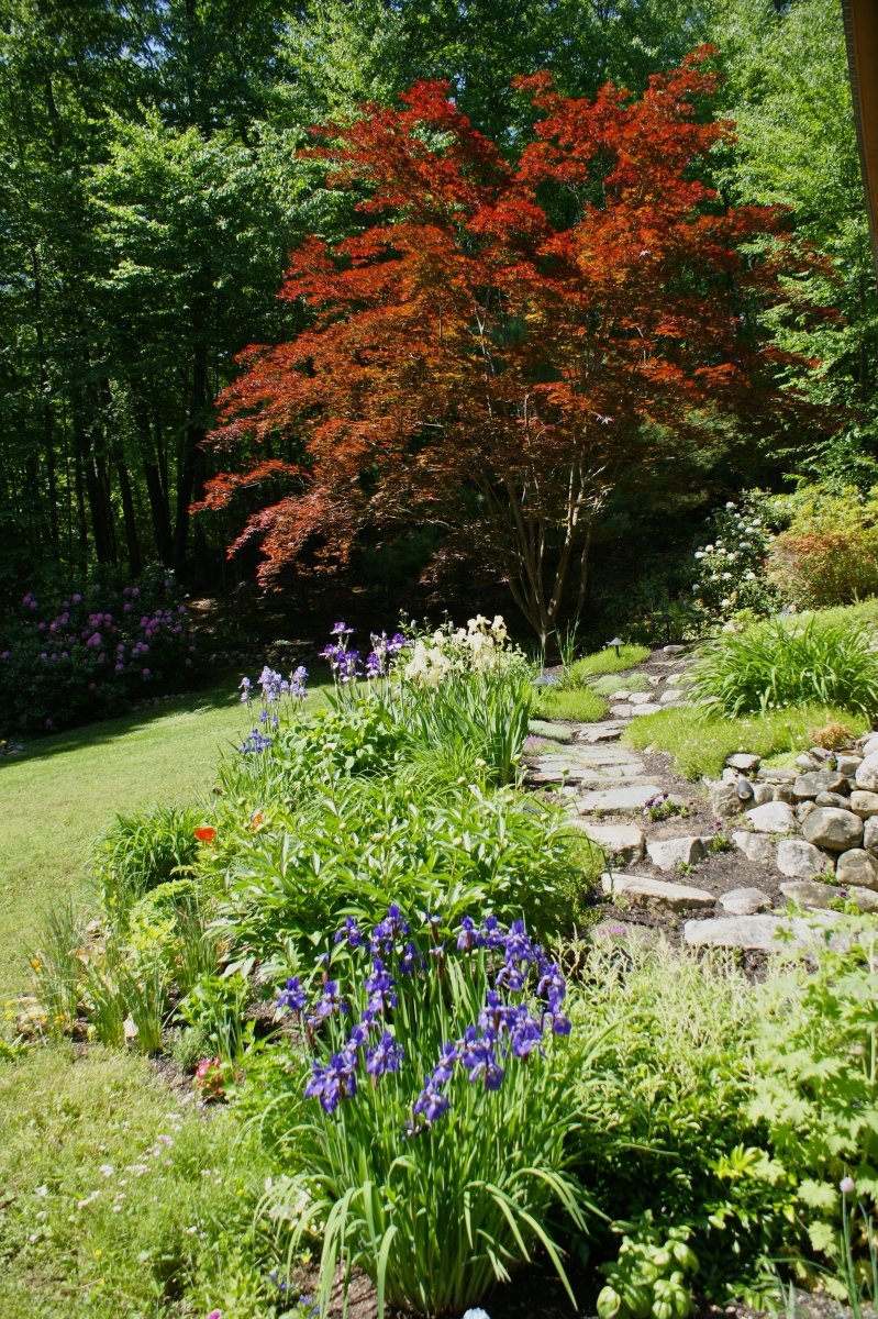 New England Garden Notebook: May 22 - June 21