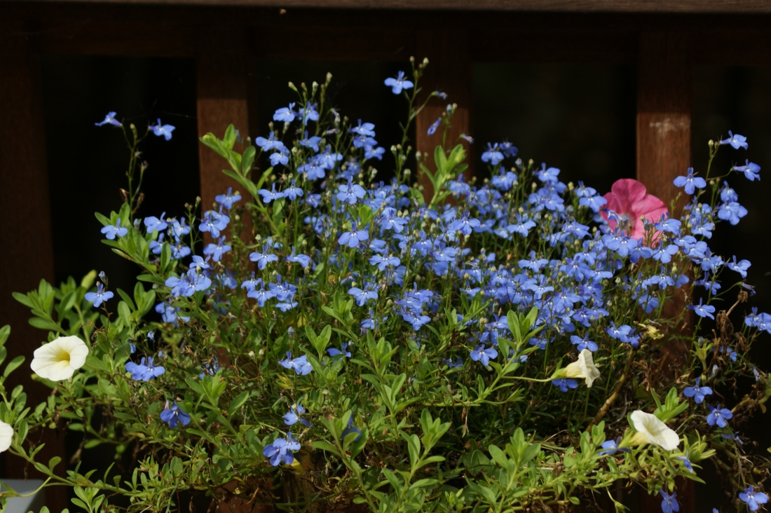 On the porch, the pots hold onto the pinks and blues of spring.